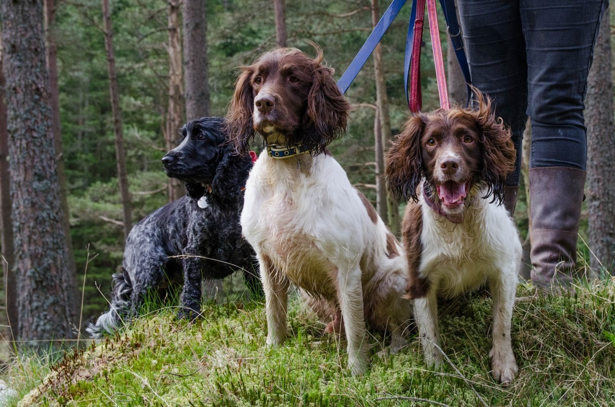 Dog Groomers in Carnoustie Angus Scotland