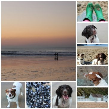 Dog_Friendly_Lusty_Glaze_Beach_Cornwall