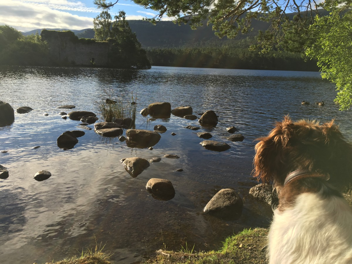 Dog Walk Aviemore Loch An Eilein