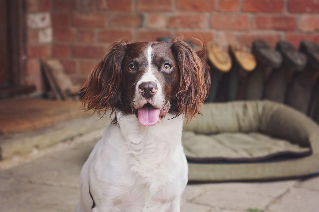 Alfie Bear Blog Best Dog Blogs
