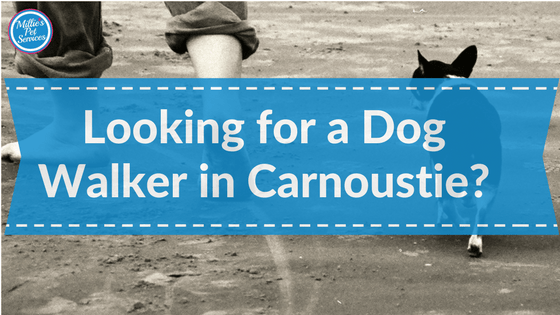Looking for a Dog Walker in Carnoustie?