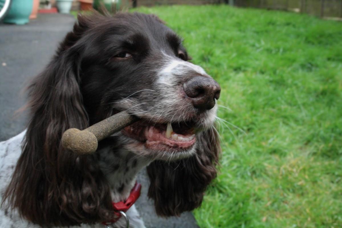 Spaniel Louise Best Dog Blogs