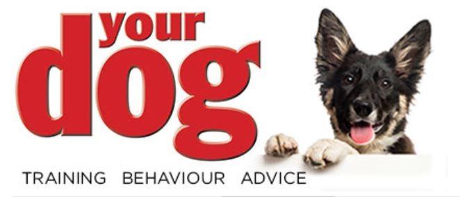 Your Dog Blog Best Dog Blogs