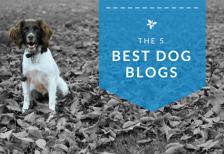 5 Best Dog Blogs