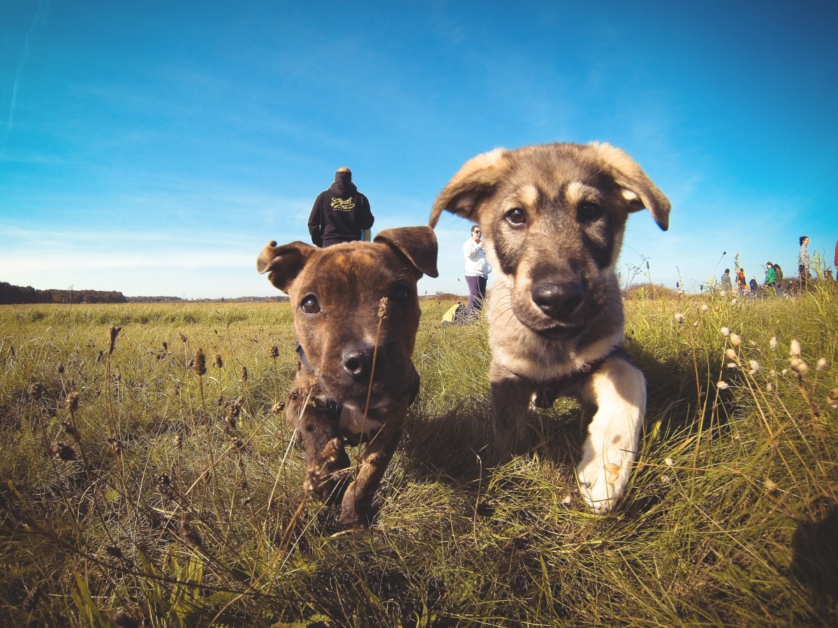 Dog Walker Offer GPS Tracking Puppies in field
