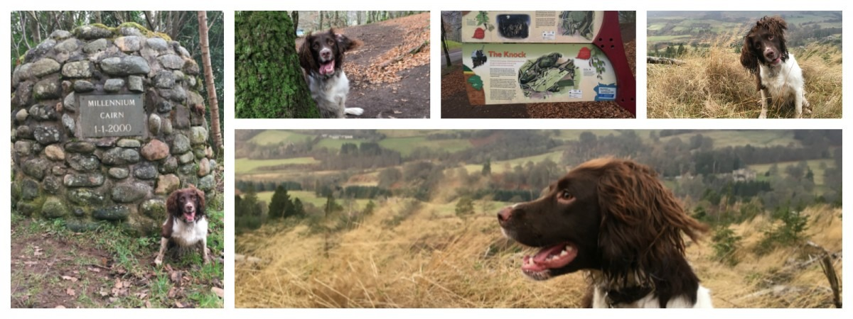 The Knock of Crieff Dog Walks in Pertshire