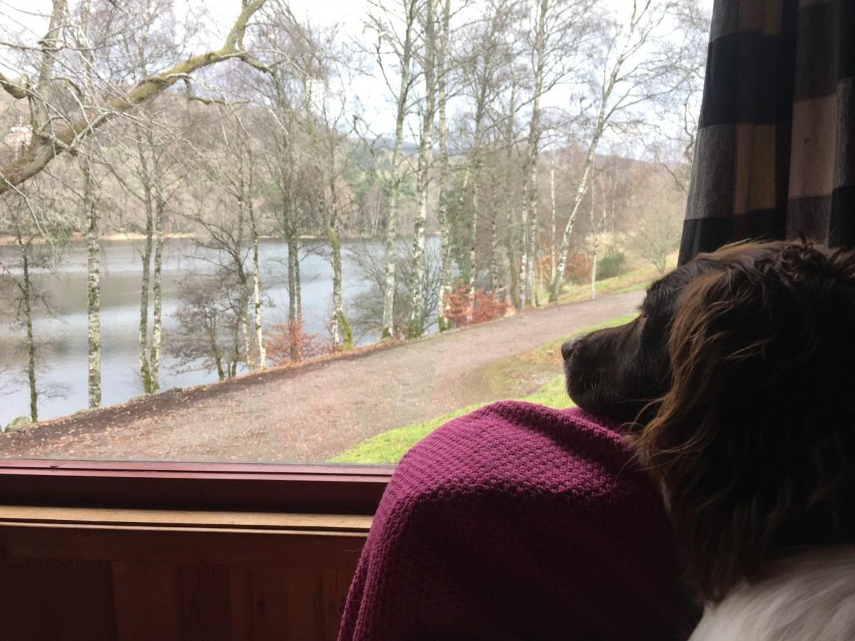 Dog-Friendly Holiday at Loch Monzievaird