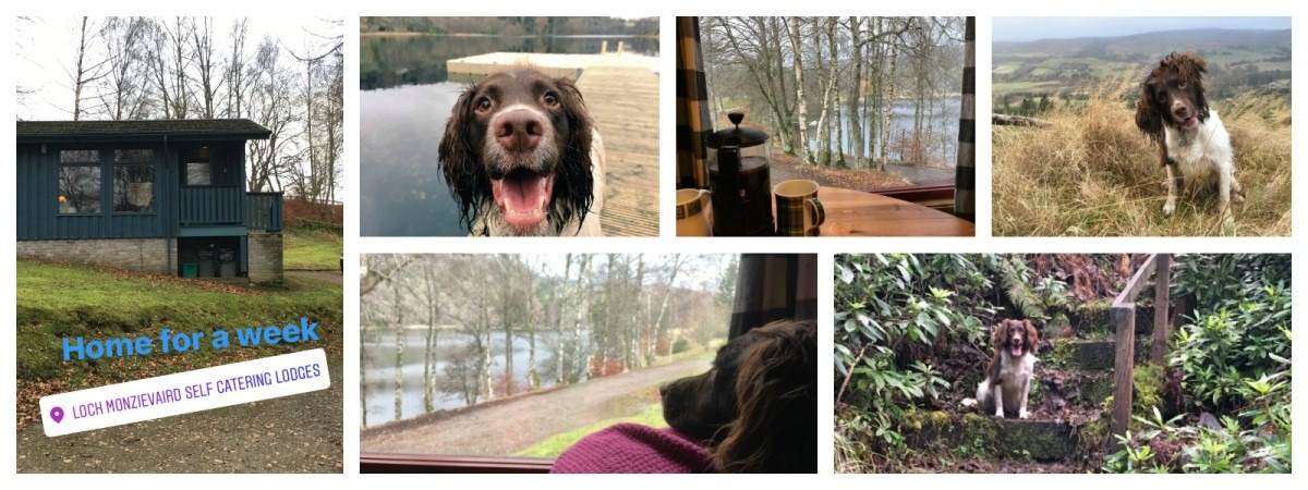 Selection of Pics from Dog-Friendly Holiday Loch Monzievaird