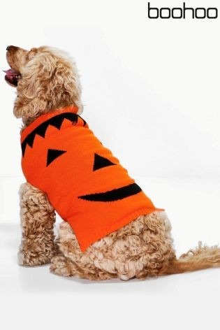 pumpkin best dog halloween costume