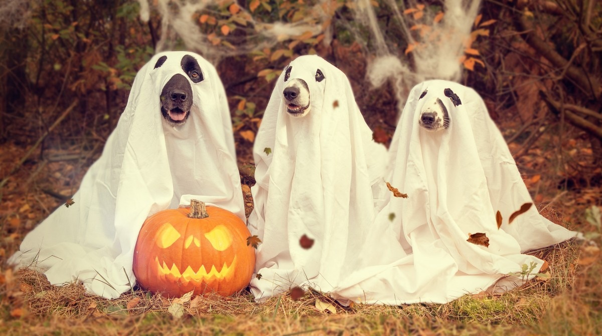 best dog Halloween costumes