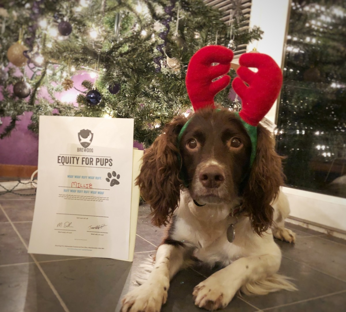 BrewDog Equity for Pups - Christmas Present for Millie