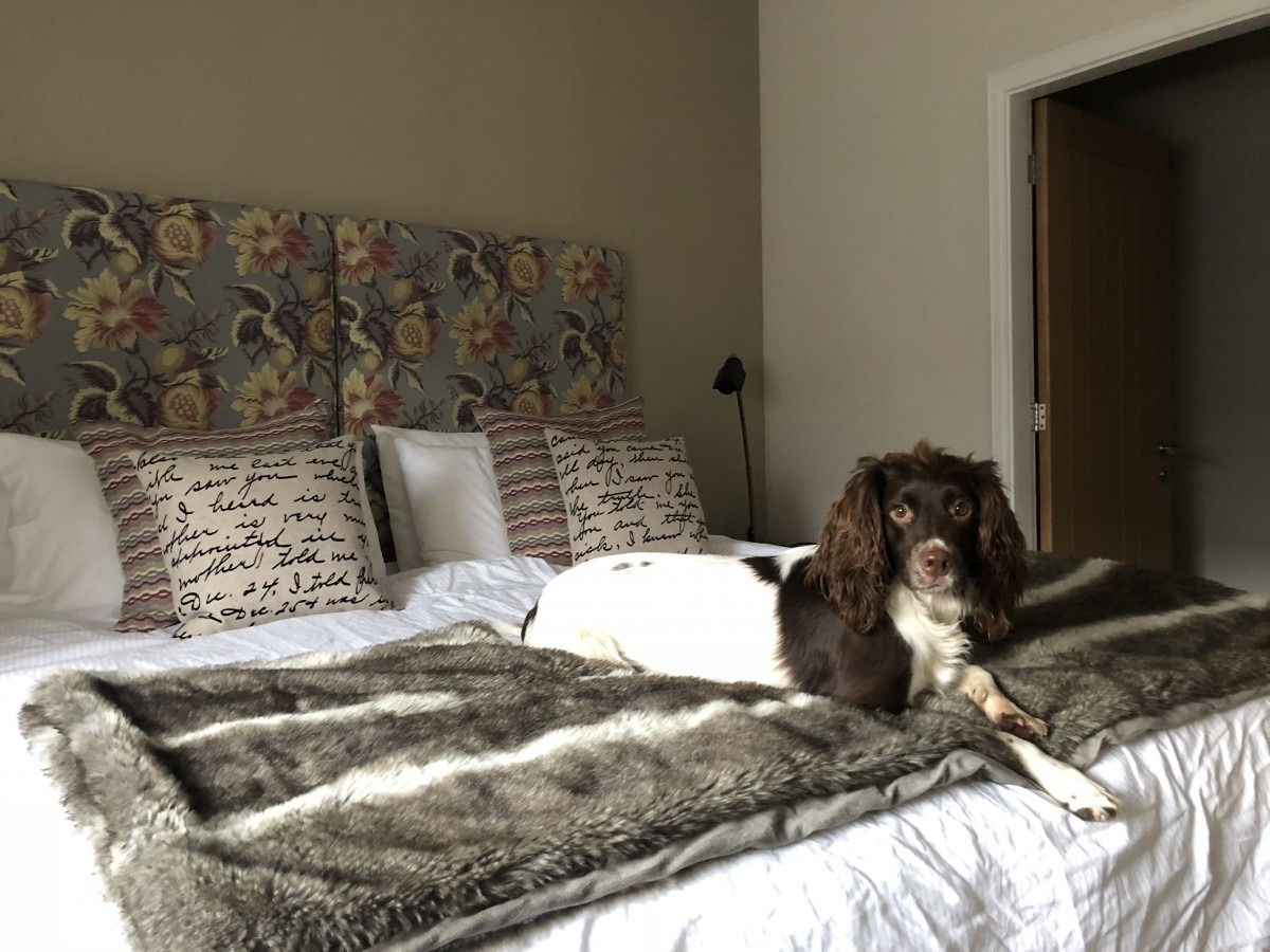 Dog Friendly Holiday in the Scottish Borders: Holiday Cottages Melrose (Reviewed)