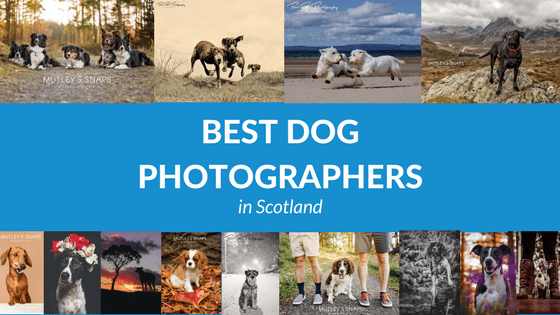 Best Dog Photographers in Scotland