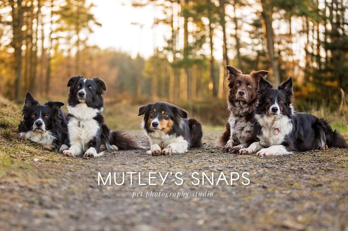 Best Dog Photographers in Scotland Mutley's Snaps Pet Photography Falkirk