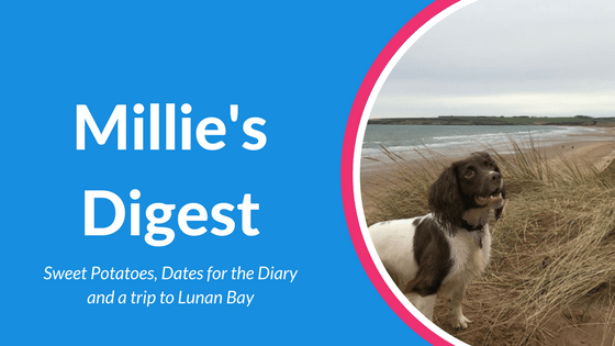 Millie's Digest 28th Jan Lunan Bay