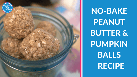 No bake peanut butter & pumpkin balls recipe