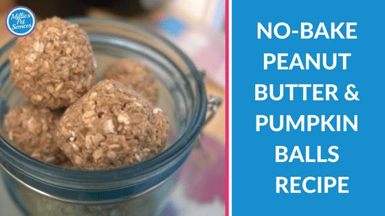 No bake peanut butter and pumpkin balls recipe