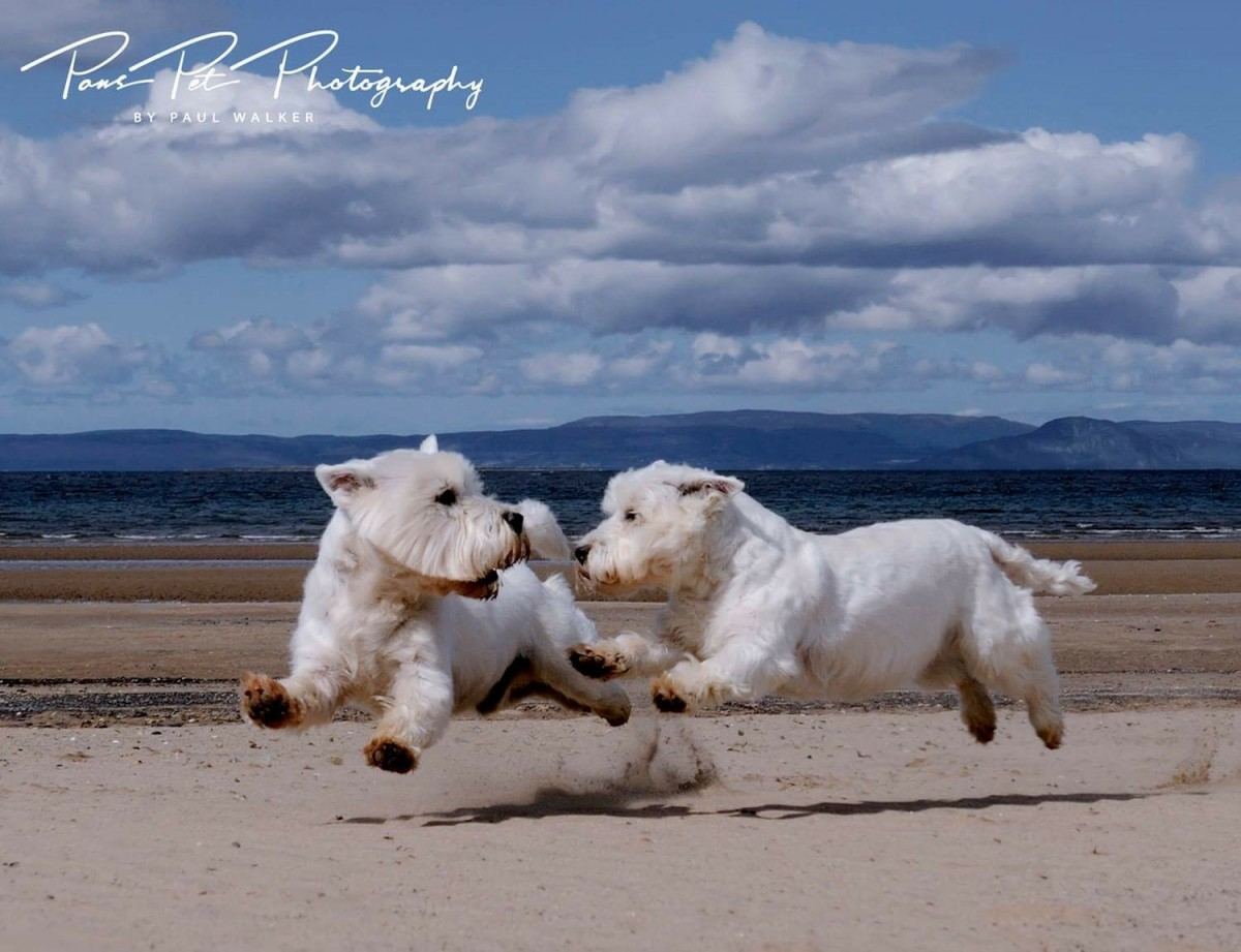 Best Dog Photographers in Scotland Paws Photography Ayrshire