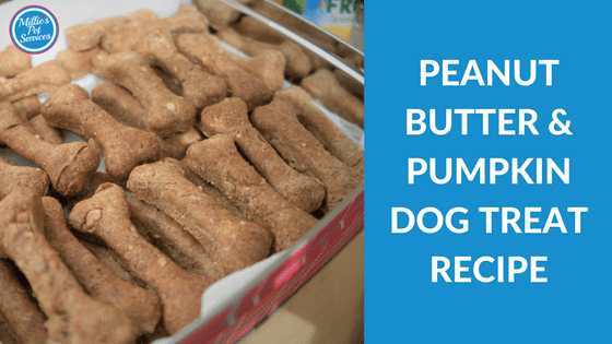 Peanut Butter and Pumpkin Dog Treat Recipe - Homemade Dog Treat Recipe
