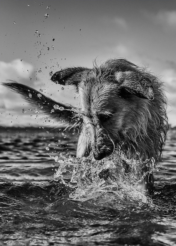 Best Dog Photographers in Scotland CMH Pet Photography Inverness