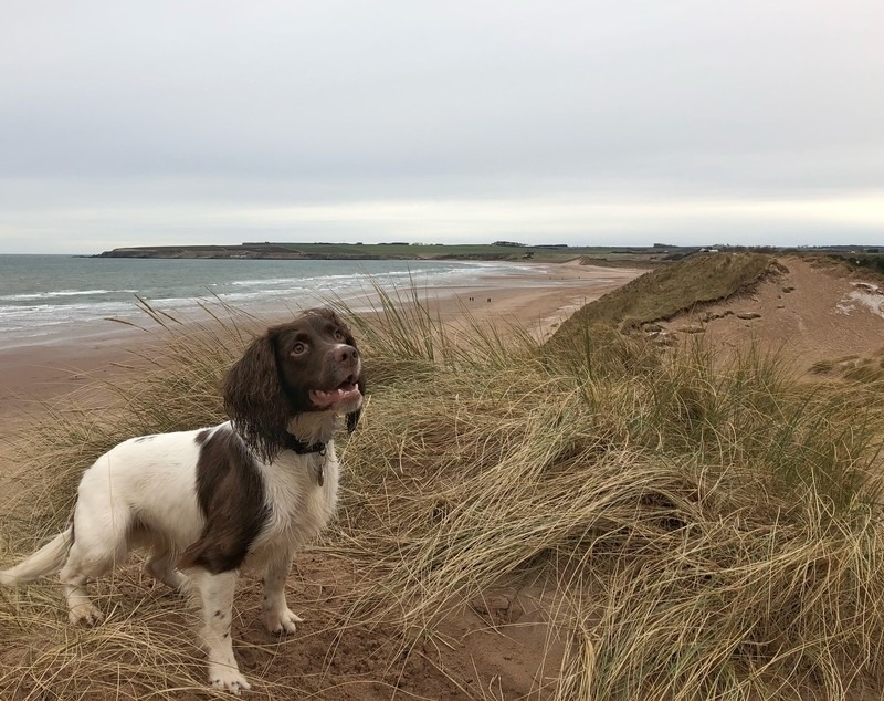 Lunan Bay Dog Walk