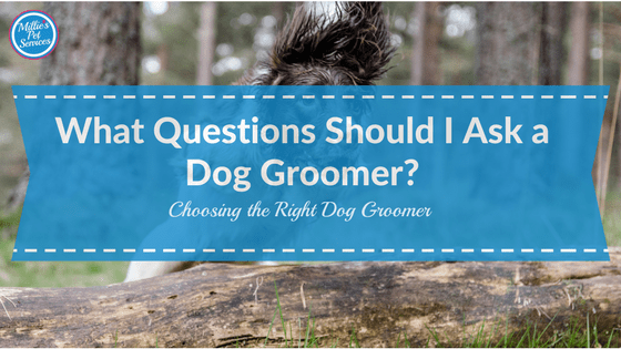 What Questions Should I ask a dog groomer? Choosing the right dog groomer