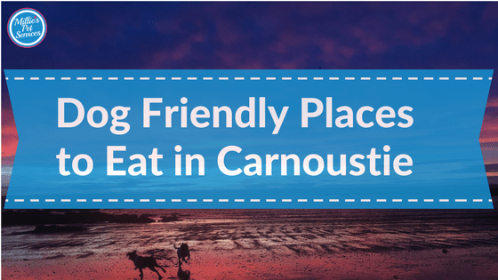 dog-friendly places to eat in carnoustie