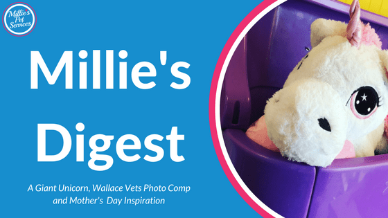 Millie's Digest 18th February