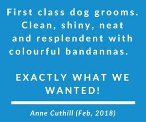 Millie's Pet Services Dog Grooming Testimonial Carnoustie