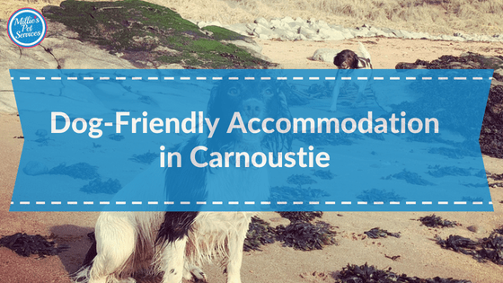 Dog Friendly Accommodation in Carnoustie