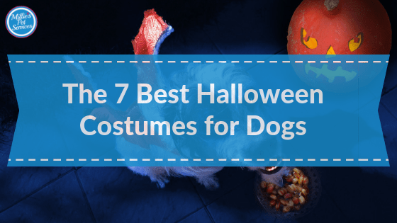 best_Halloween_Costumes_for_Dogs