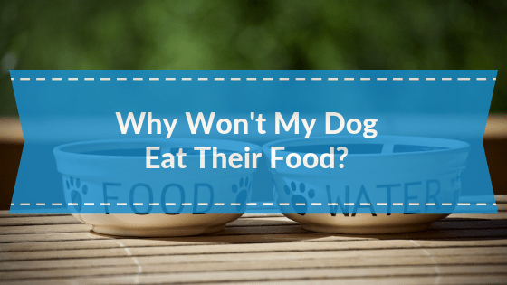 Why won't My Dog Eat Their food