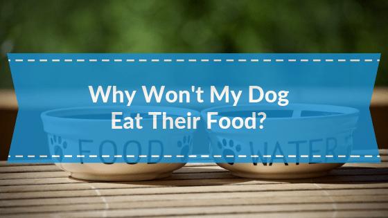 Why won't My Dog Eat Their food