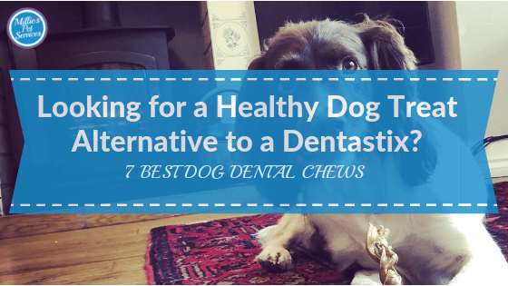 Looking For a Healthy Dog Treat Alternative to a Dentastix? 7 Best Dog Dental Chews