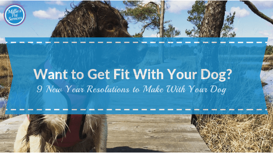 Want to Get Fit With Your Dog? 9 New Year Resolutions to Make With Your Dog