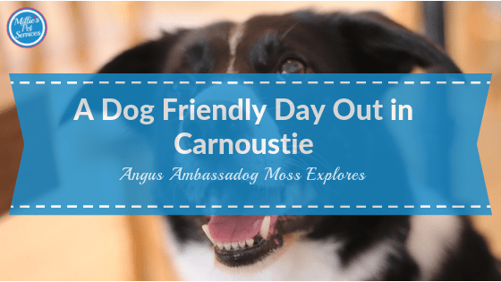 Dog_Friendly_Day_Out_in_Carnoustie_ Angus_Ambassadog_Moss_Explores