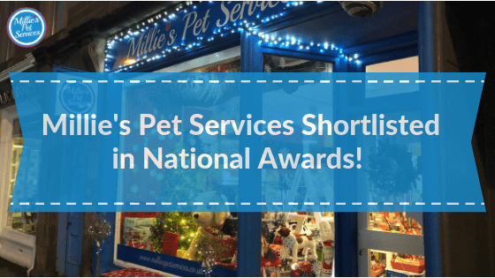 Millies-pet-services-federation-of-small-businesses-awards