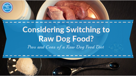 Considering_Switching _Raw_Dog_Food_Pros_and_Cons_of_a_Raw_Dog_Food_Diet