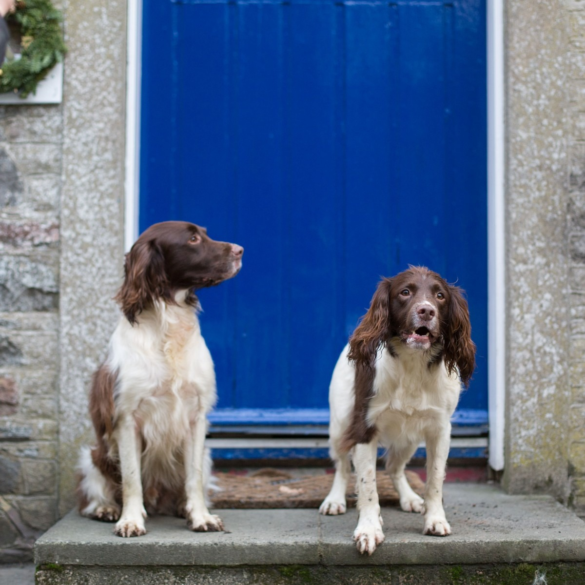 Dog-Friendly-Accommodation-Scottish-Borders-Beech-Cottage-Sykes-Cottages