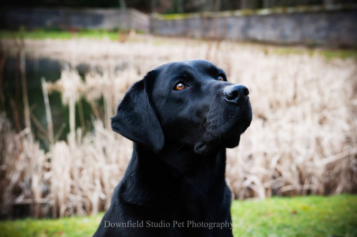 Downfield)Studio_Pet_Photography_Dog_Photographer_Angus