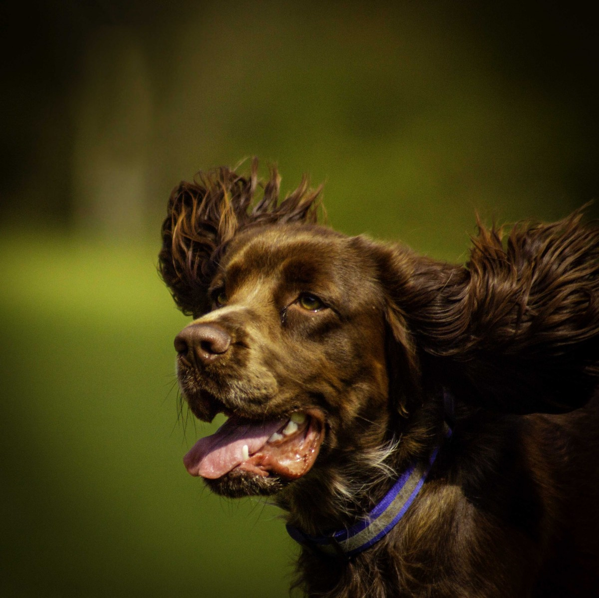 Photos_by_annemarie_dog_photographer_angus