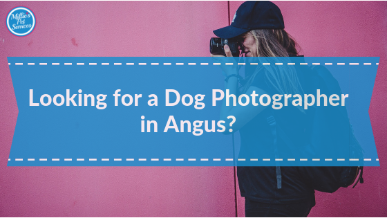 Looking-for-a-dog-photgapher-in-angus