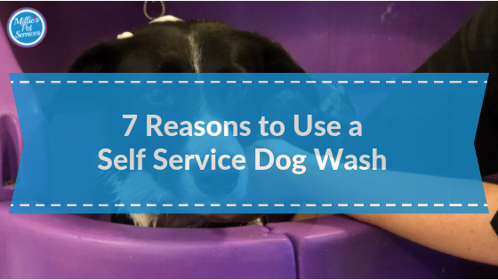 7_reasons_to_use-self-service-dogw-wash
