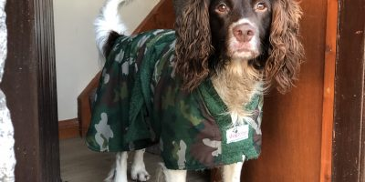 Dog Coats and Drying Coats