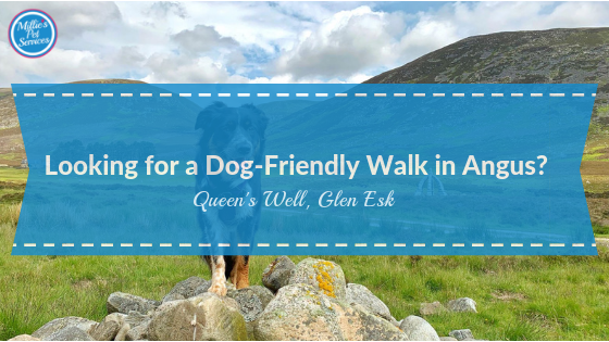 Dog-friendly-walk-angus-glens-queens-well