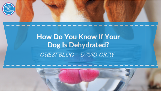 how-do-you-know-if-your-dog-dehydrated