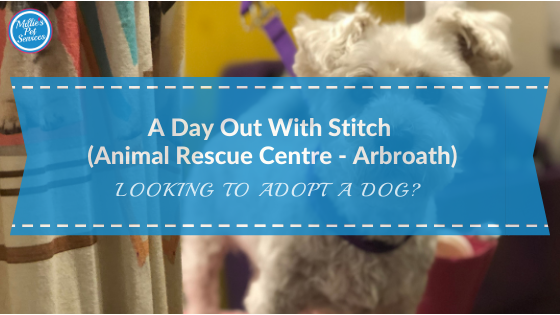 adopt-dog-stitch-bichon-schnzr-arbroath-animal-rescue