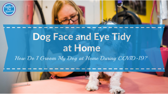 how-groom-dog-home-face-eye-tidy