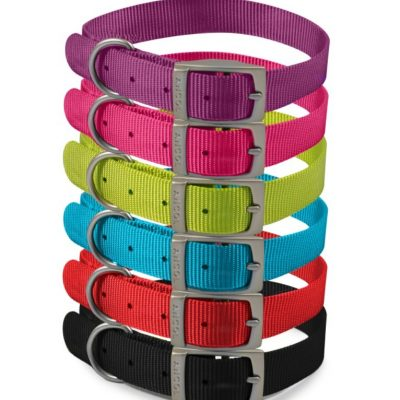 Ancol Viva: Buckle Collar