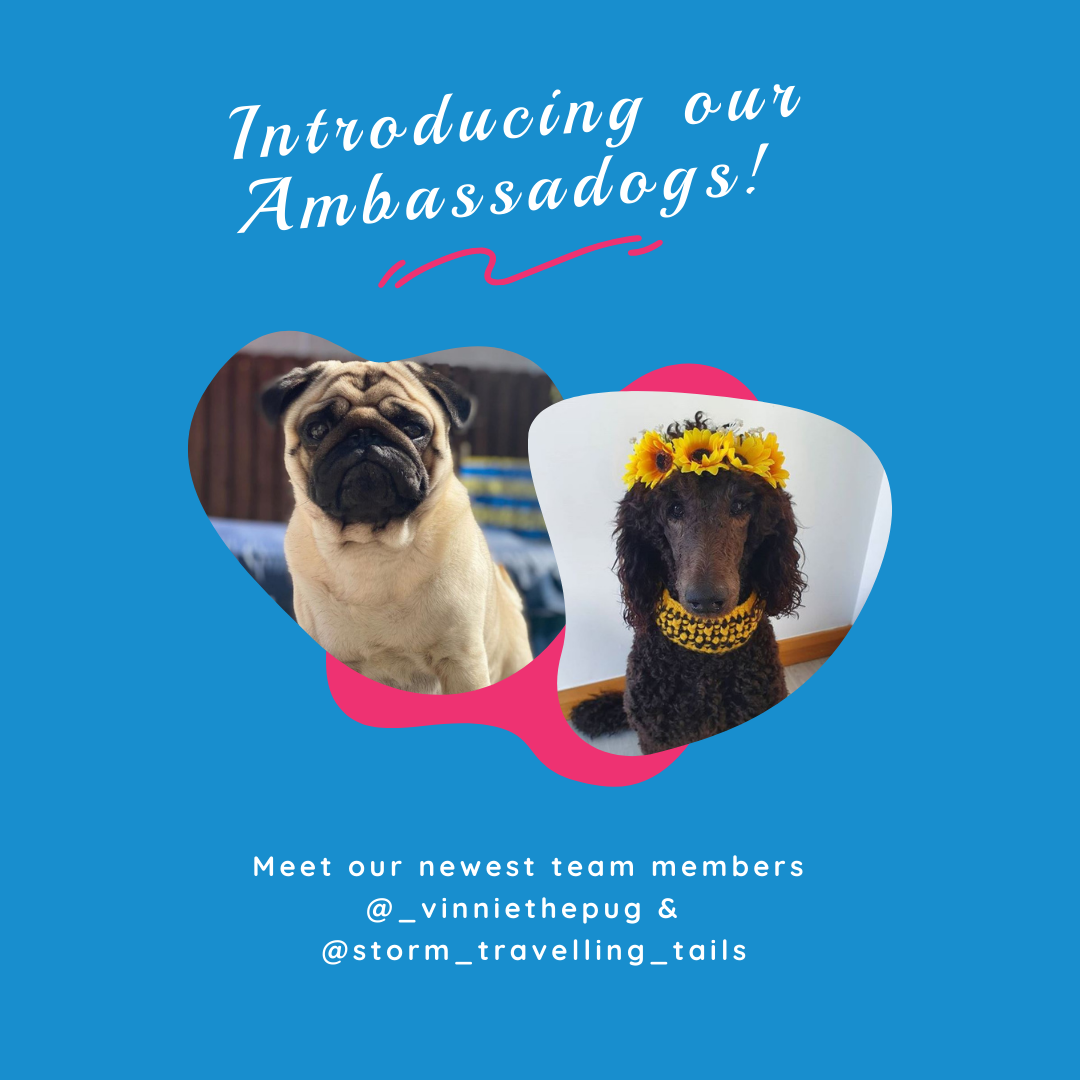 ambassadogs-socttish-instagram-dogs